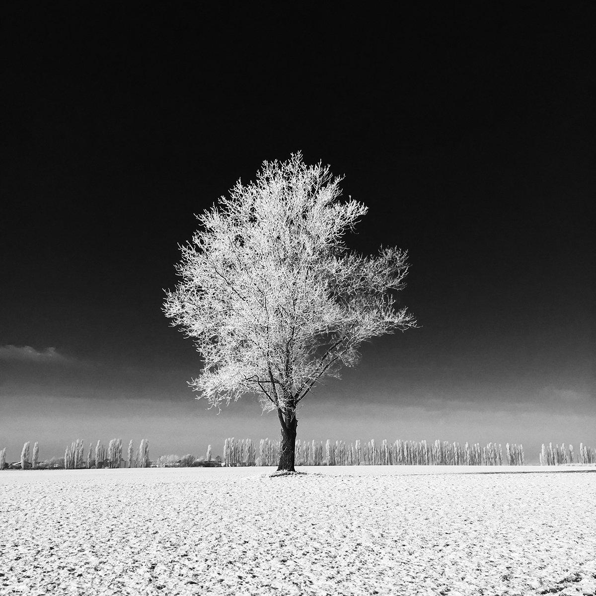 Landschaftsfoto Baum